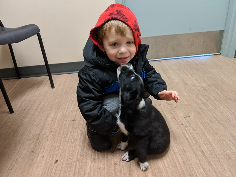 canada's cutest adopted pet contest, iadopt for the holidays