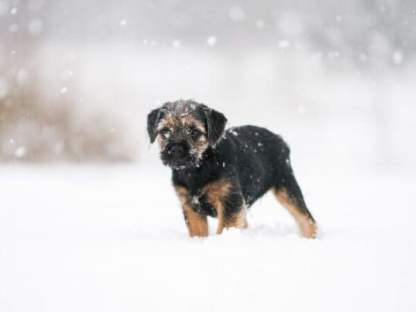 cold weather safety, pet tips, winter