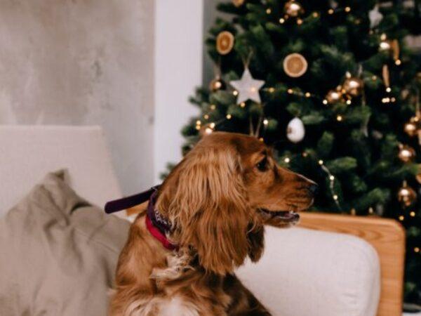 christmas eve, christmas activities