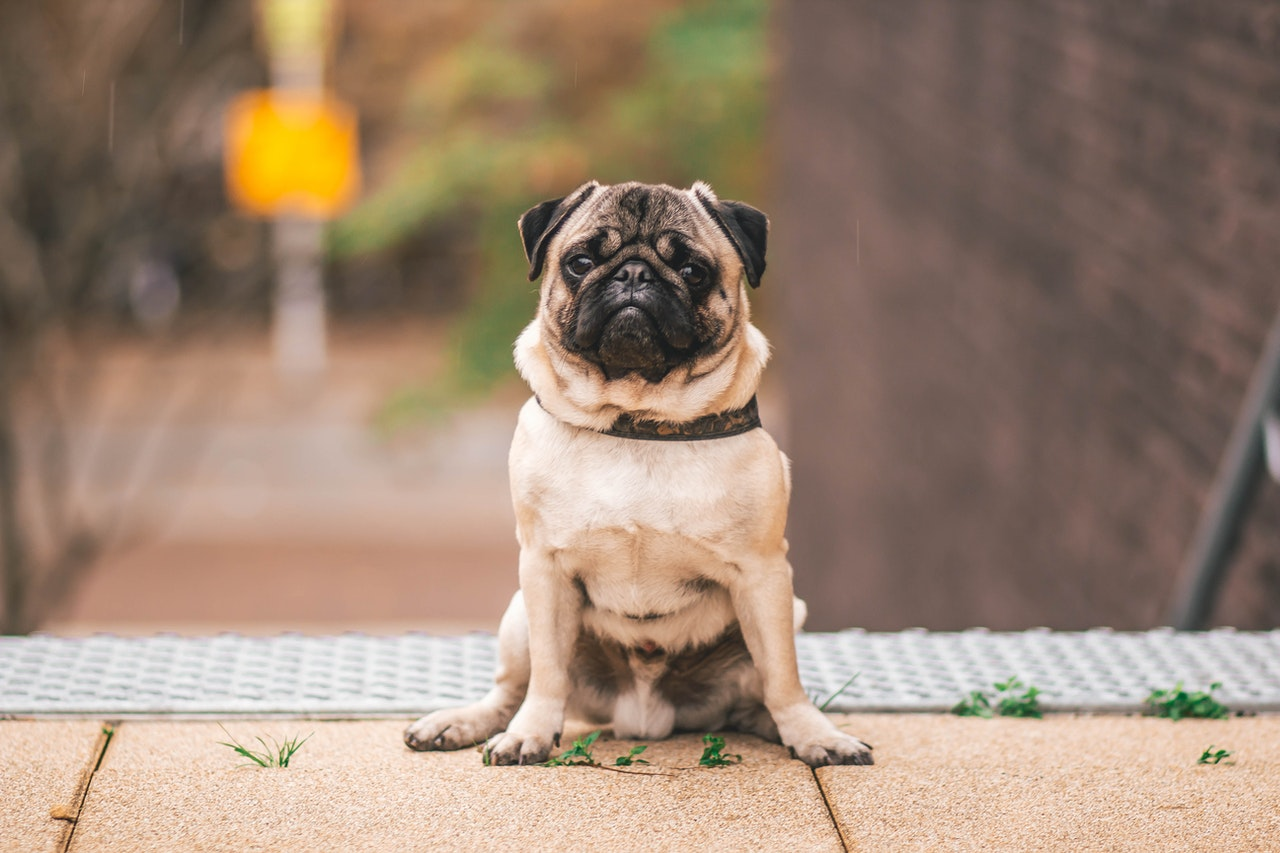 How To Teach Your Dog To Sit Ontario Spca And Humane Society