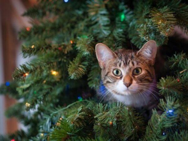 christmas tree, cat tips, christmas