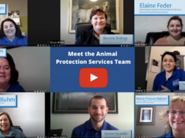 animal protection services,