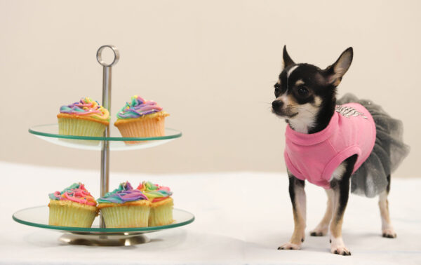 Today is National Cupcake Day™ , cupcake day, cupcakes, media release
