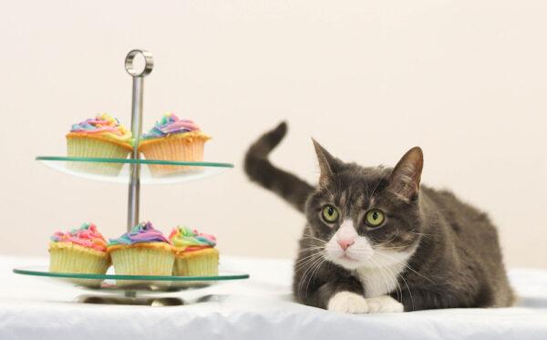 TodayisNational Cupcake Day™, cupcake day, cupcakes, media release