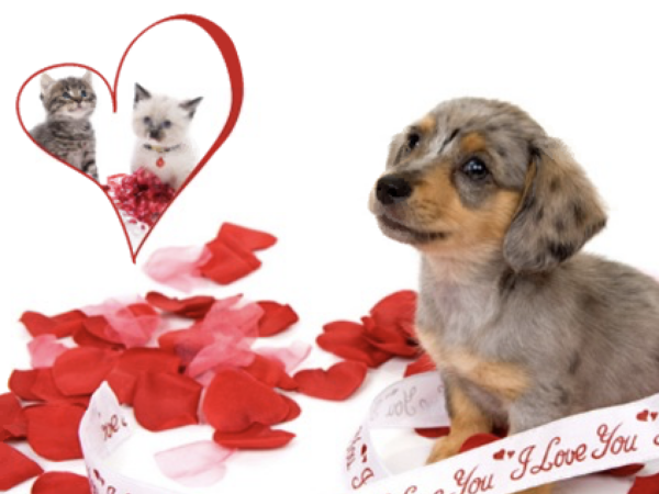 valentine's day, grams, paws and give