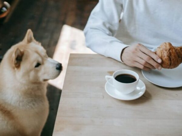 dogs eating off the table, pet tips