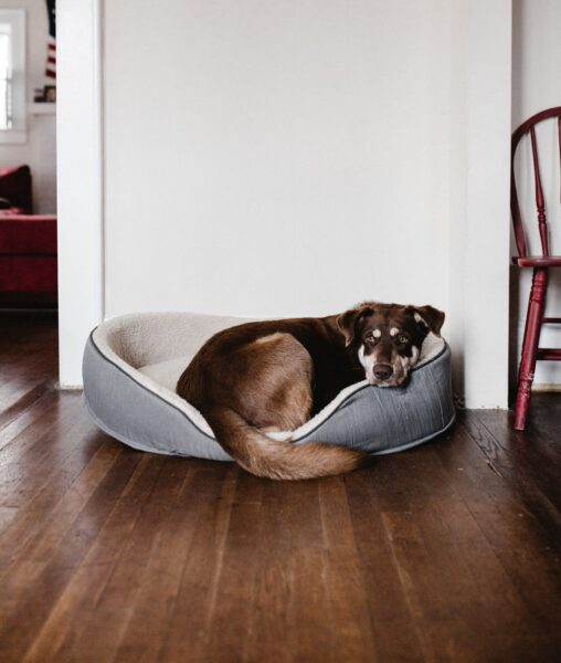 heartworm in dogs, dog care, prevention