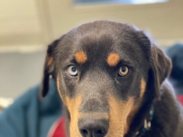 Koda, trim dog's dark nails