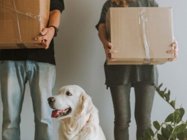 stress out of moving day, moving with pets, moving with your dog