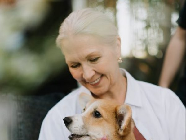 canine arthritis and dogs, senior dog