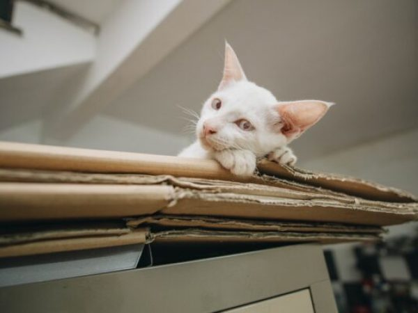 moving day stress for your cat, moving day stressful for cats