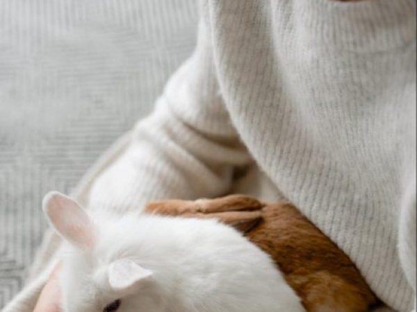 rabbit company, bunny blog