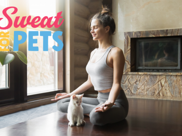 sweat for pets