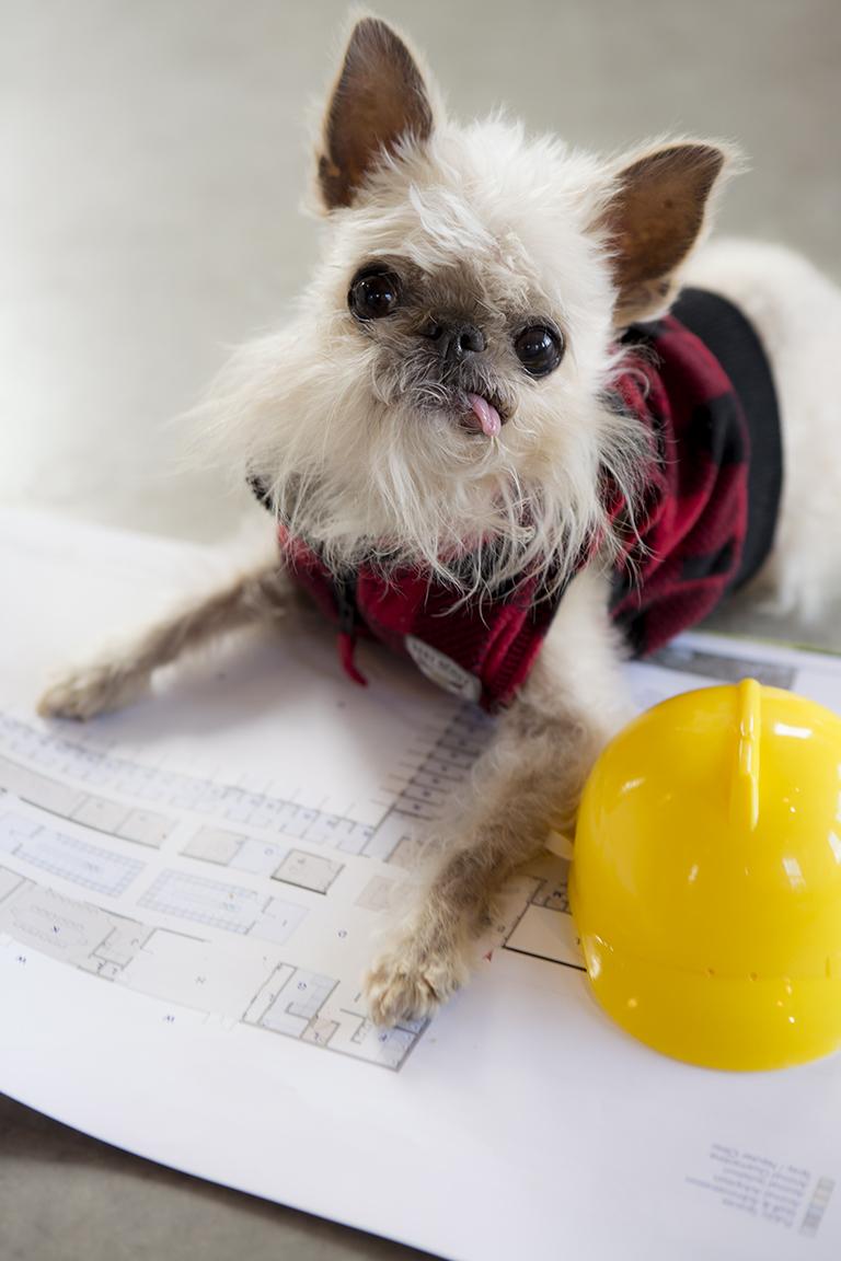 dog rehabilitation centre, media release, owen the griff