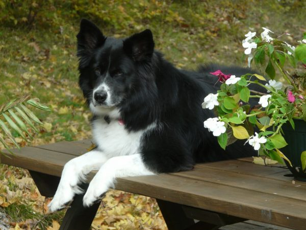 world pet memorial day, donor,