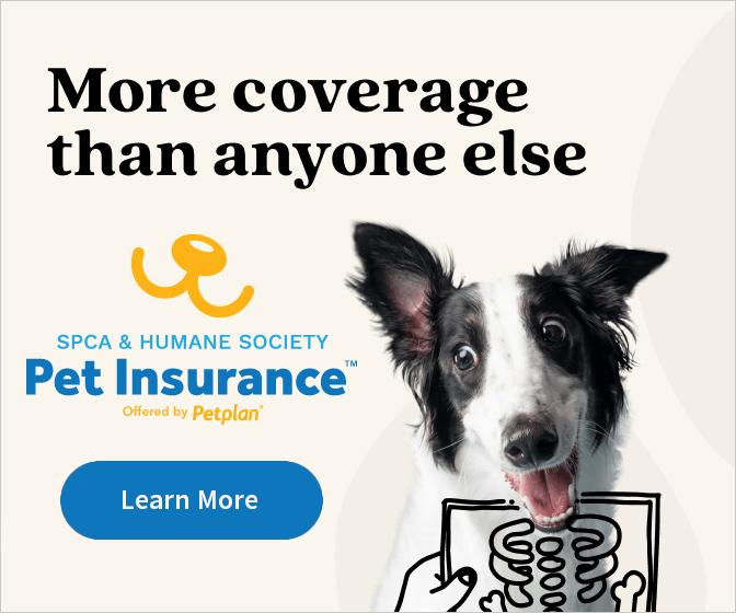 Petplan insurance side bar ad