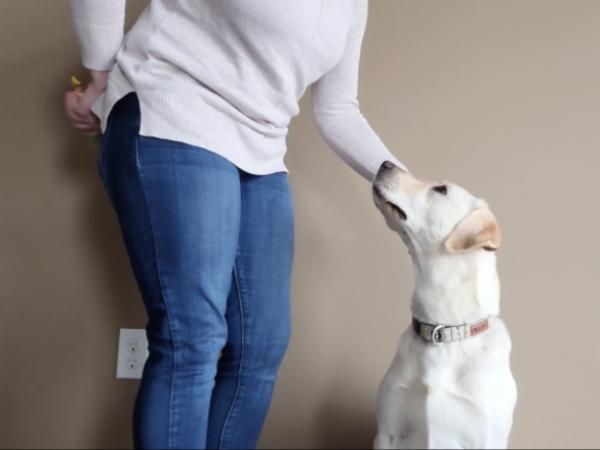 calm greeting, greet calmly, dog training