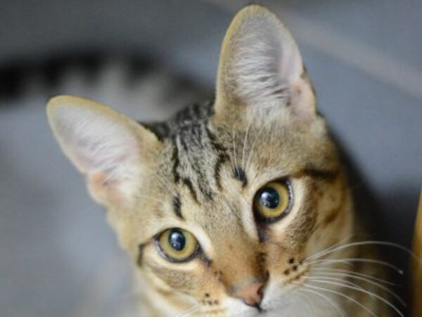 cat training, training your cats cues