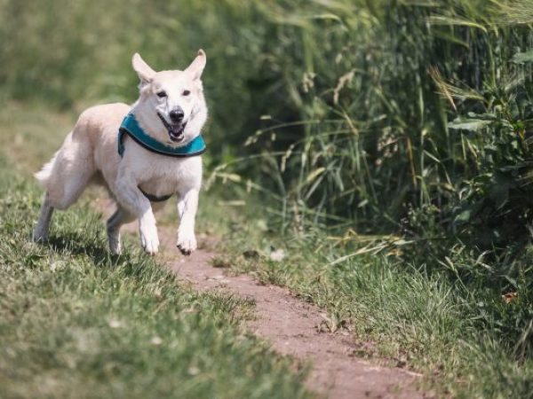 managing your dog's energy