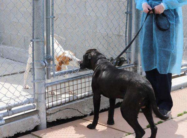 dog transport,
