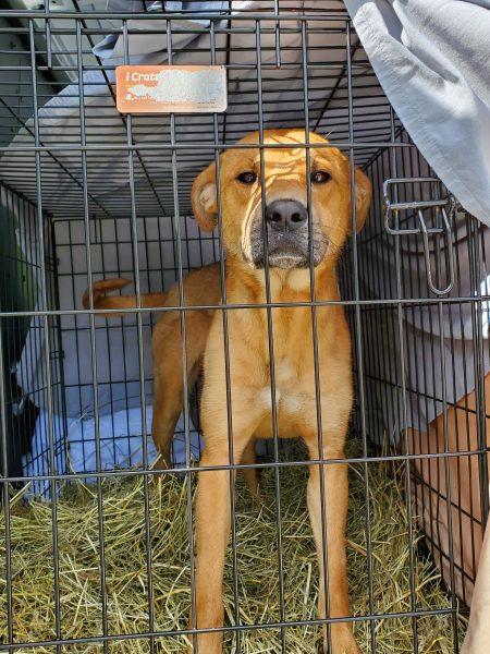 dog transport, U.S. dogs