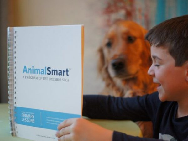 boy with animalsmart book and dog reading