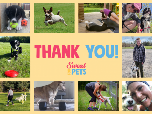 sweat for pets, campaign, fundraiser