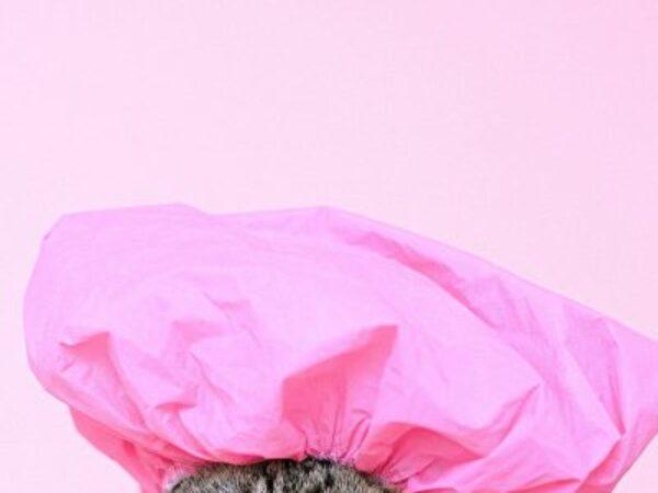bathing your cat, cat bath, cat grooming