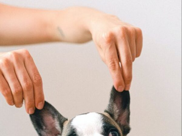 clean your dog's ears, dog tips, pet tips, ontario spca