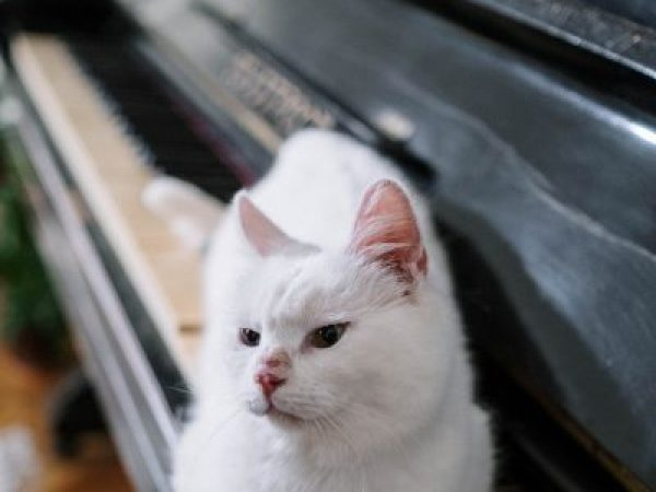 music therapy, music pets, music and pets