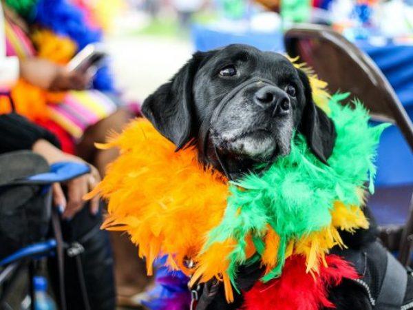 pride weekend, pride parade, pet safety