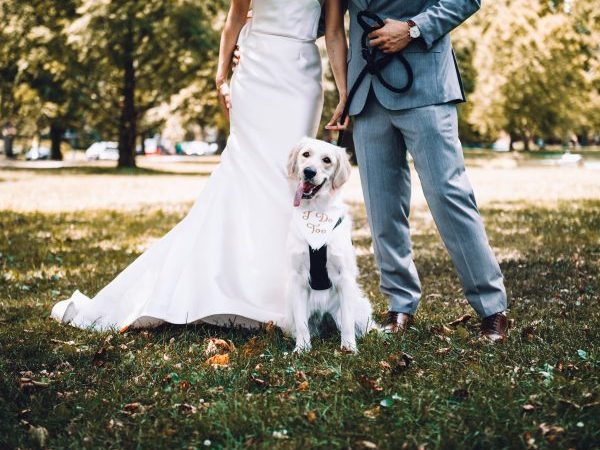 pet in your wedding, pets and weddings