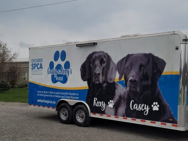 casey and roxy's ride, animal transport trailer