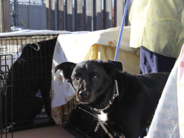 northern dog adjust, animal north network