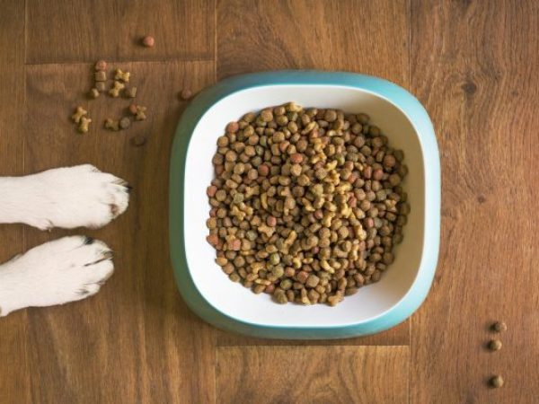 how much food should you feed your dog, royal canin