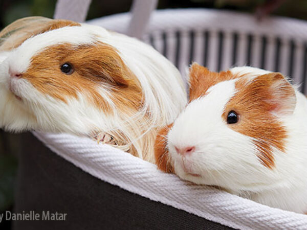 happy tails, Ginger and Fifi