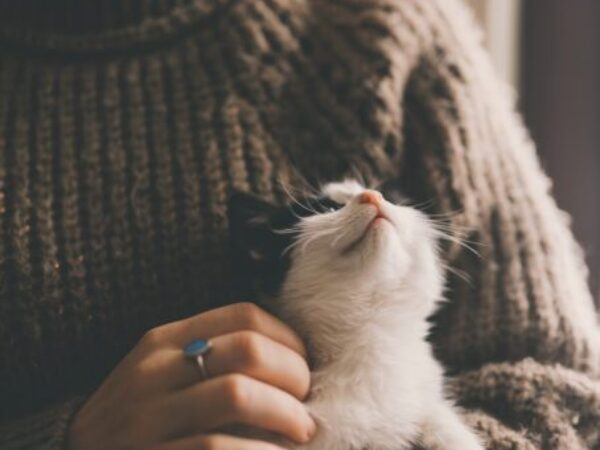 encouraging your cat to eat, missing meals, appetite
