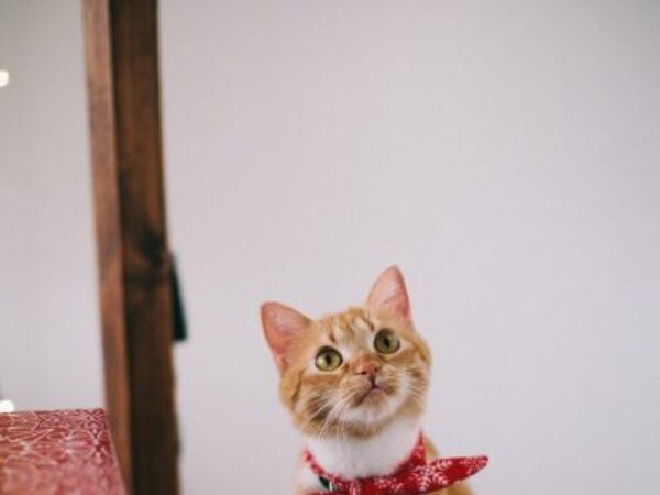 build trust in foster kitten