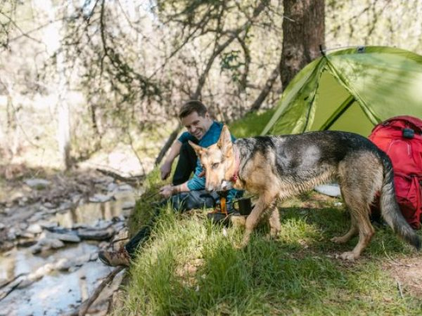 national parks with your dog, camping, national parks, pet tips