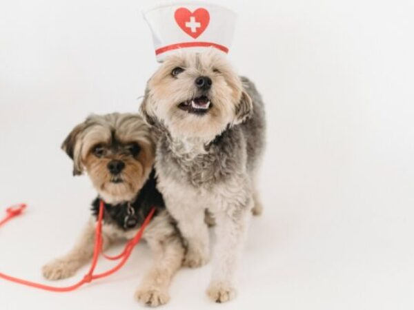 veterinary visits, fear free