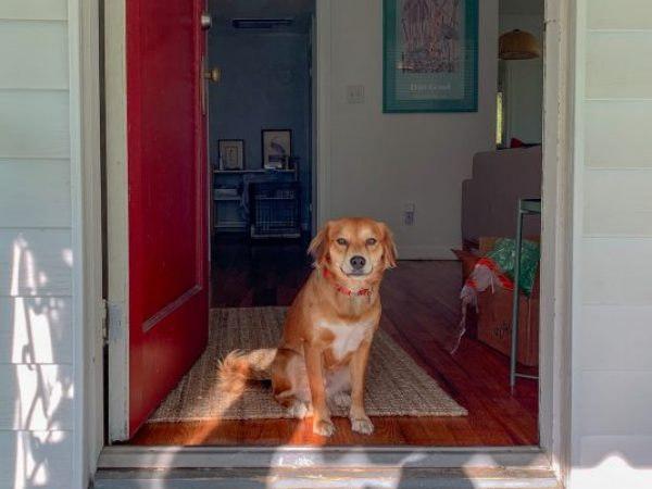 first week home, bring home a new pet, tips for bringing home a new pet, new pet, adoption tips