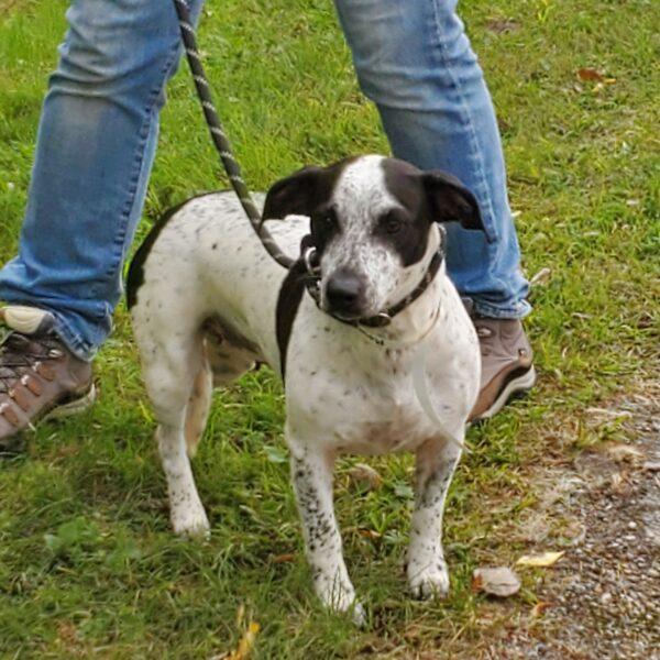 dog from US transport September 24