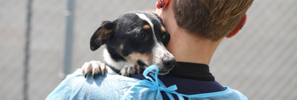 Animal-Protection-Services-Banner