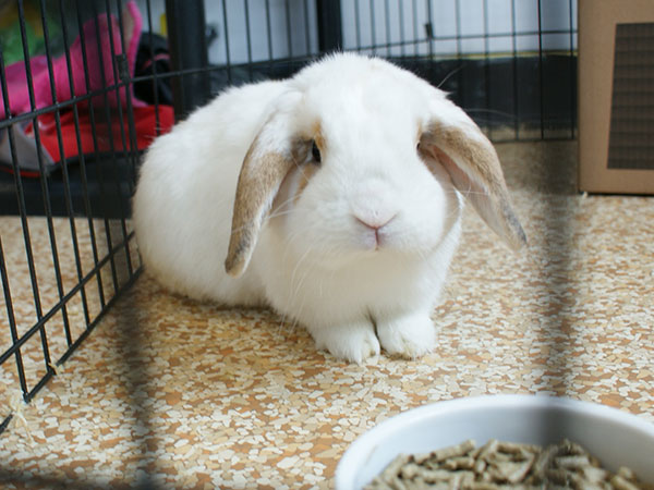 bunny in cage