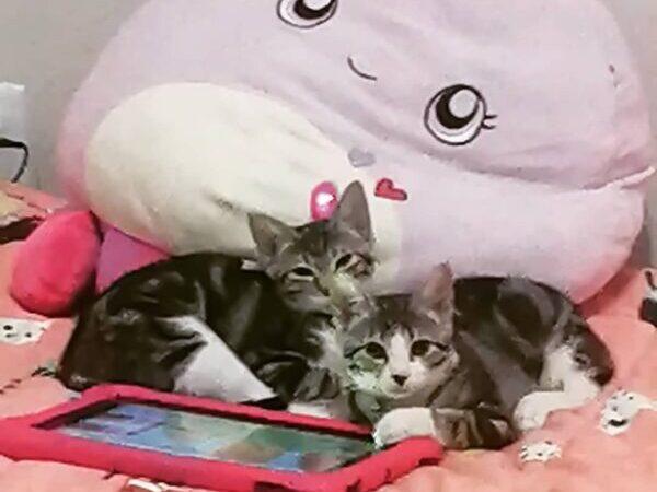 Texas cats