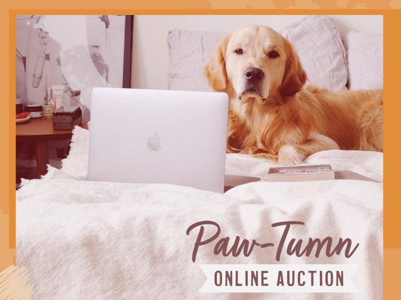 Paw-tumn Online Auction Dog with Laptop