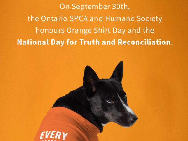 orange shirt day, National Truth and Reconciliation Day
