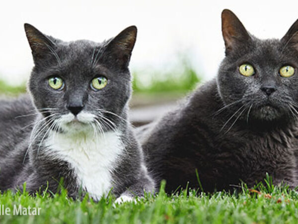 ritchie and scooter, happy tails