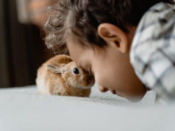 International rabbit day, rabbit adoption