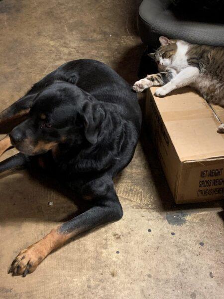 working cats, leo, working cat